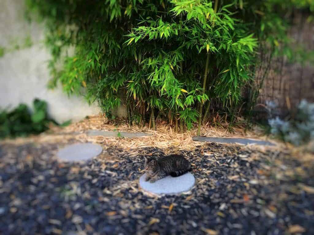 espace-floreal-jardin-chat